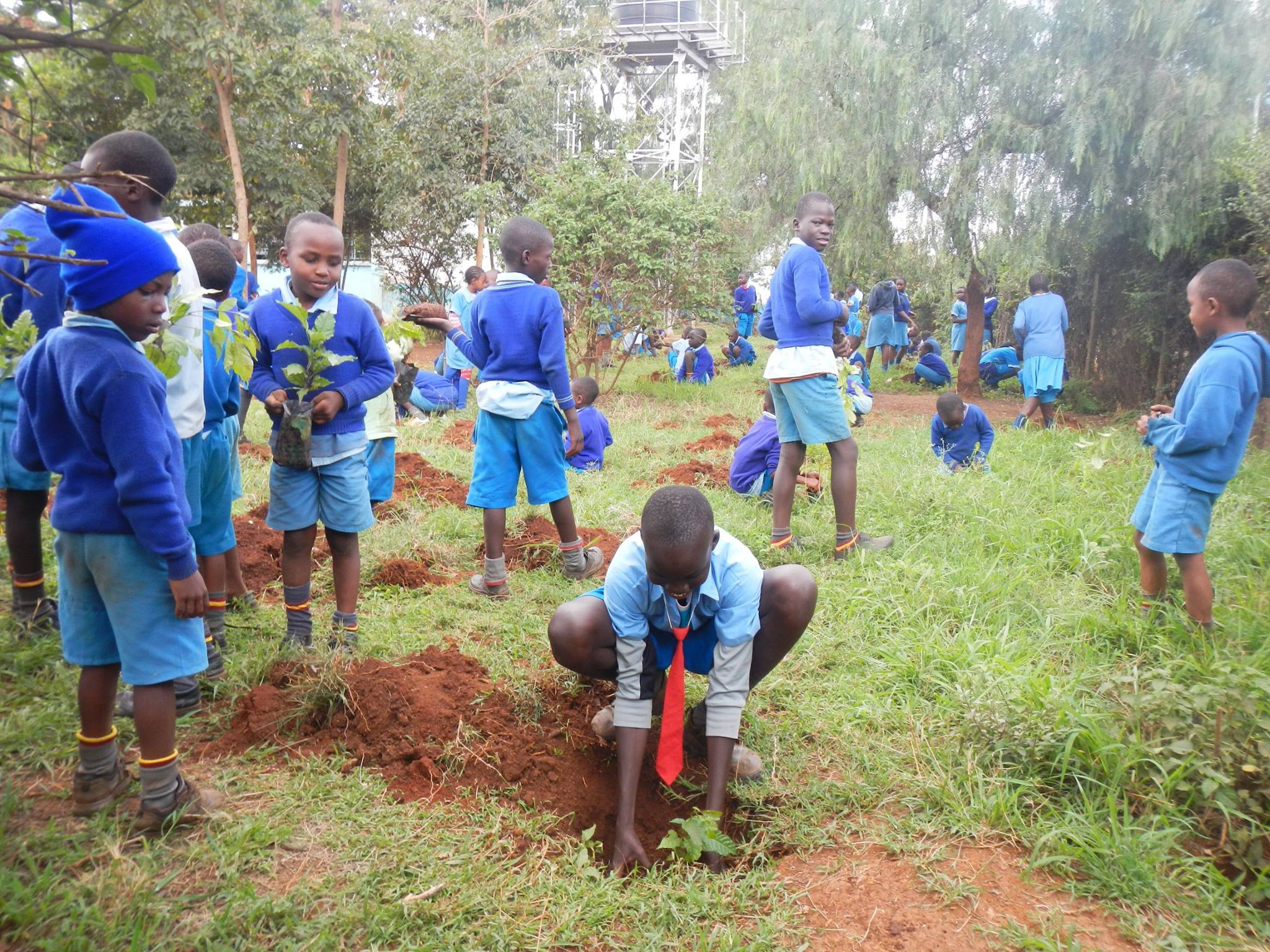 The students of Kasarani Primary do their bit towards greening their school.