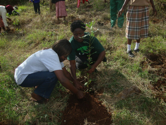 Panting of Peace trees with the secondary schools at Wangari Maathai Garden