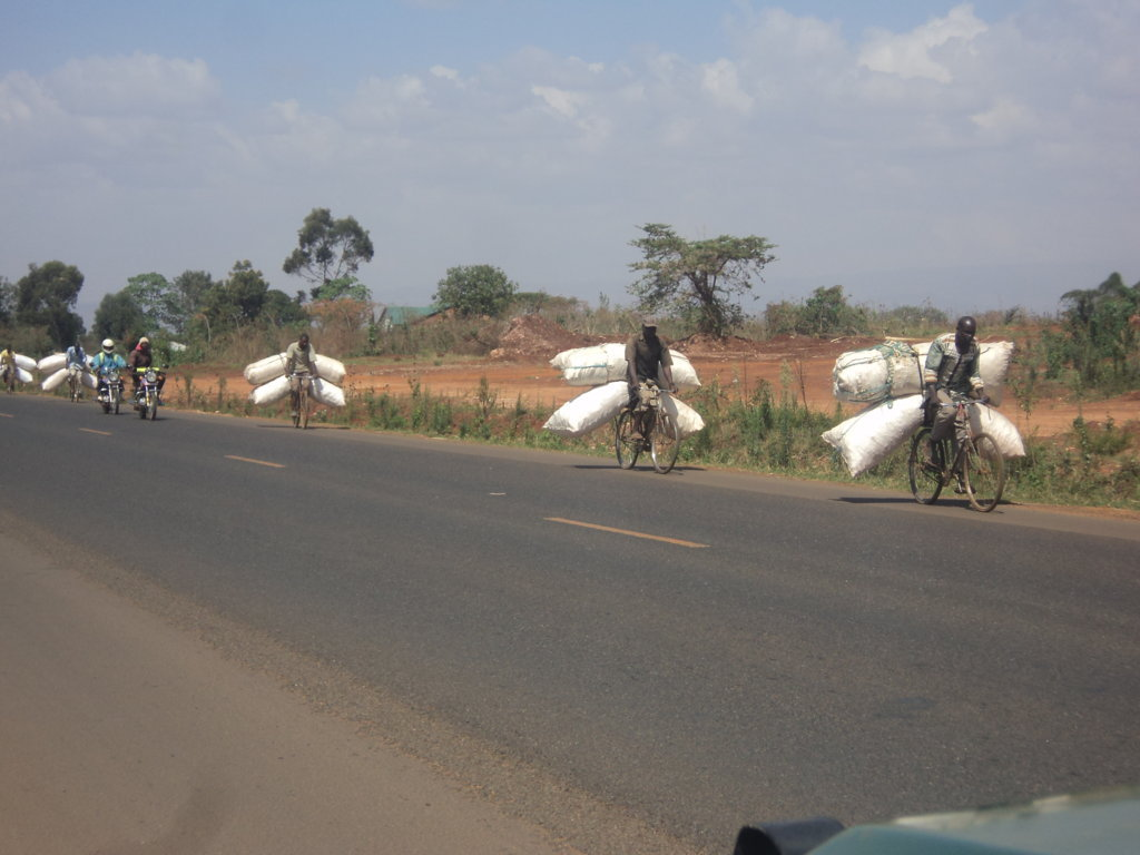 A group of men taking Maize cobs to Kitale town for sale as fuel