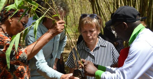 "The ""Community Bamboo model for Kenya"" aims at generating sustainable income for smallholder farmers and their households"