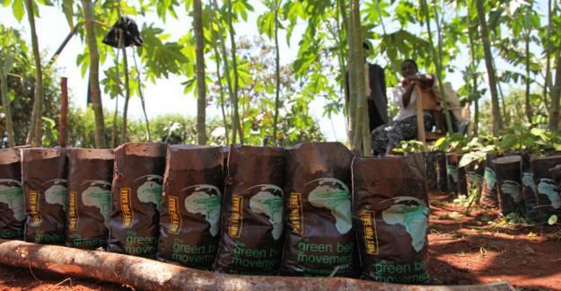 Easily give a gift while supporting tree planting in Kenya for just $10 (U.S.).
