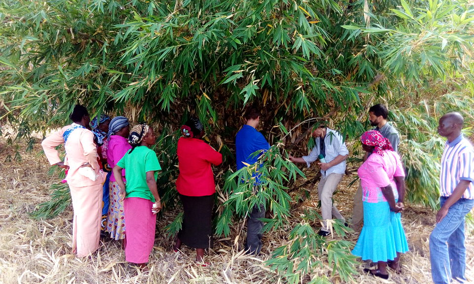 A team from the Green Belt Movement and Waterstone inspect one of the bamboo clumps