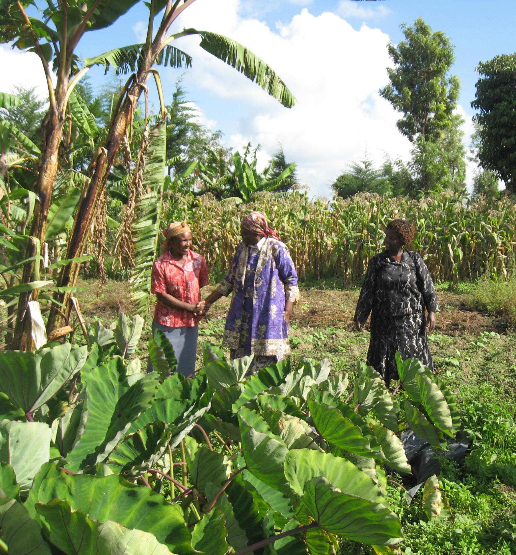 Mrs. Njehu (GBM Board Member) visiting GBM project site on Food Security in Nyeri County