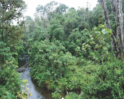 A streamside zone area - restoration of forests and other natural vegetation