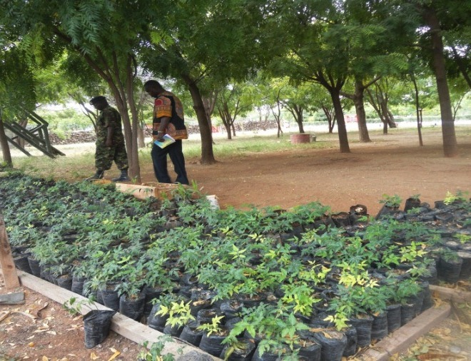 Army tree nursery under with a variety of spices such as white cedar, chinaberry tree, bead-tree, Cape lilac and Indian lilac