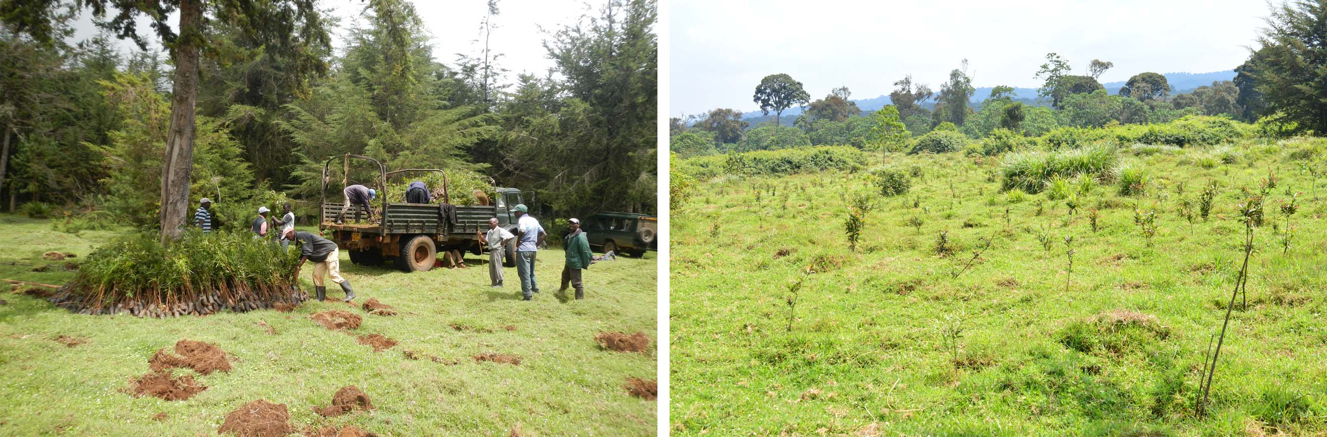 The tree seedlings are offloaded on site in April 2015 and Current status of the site showing a high survival rate of the trees
