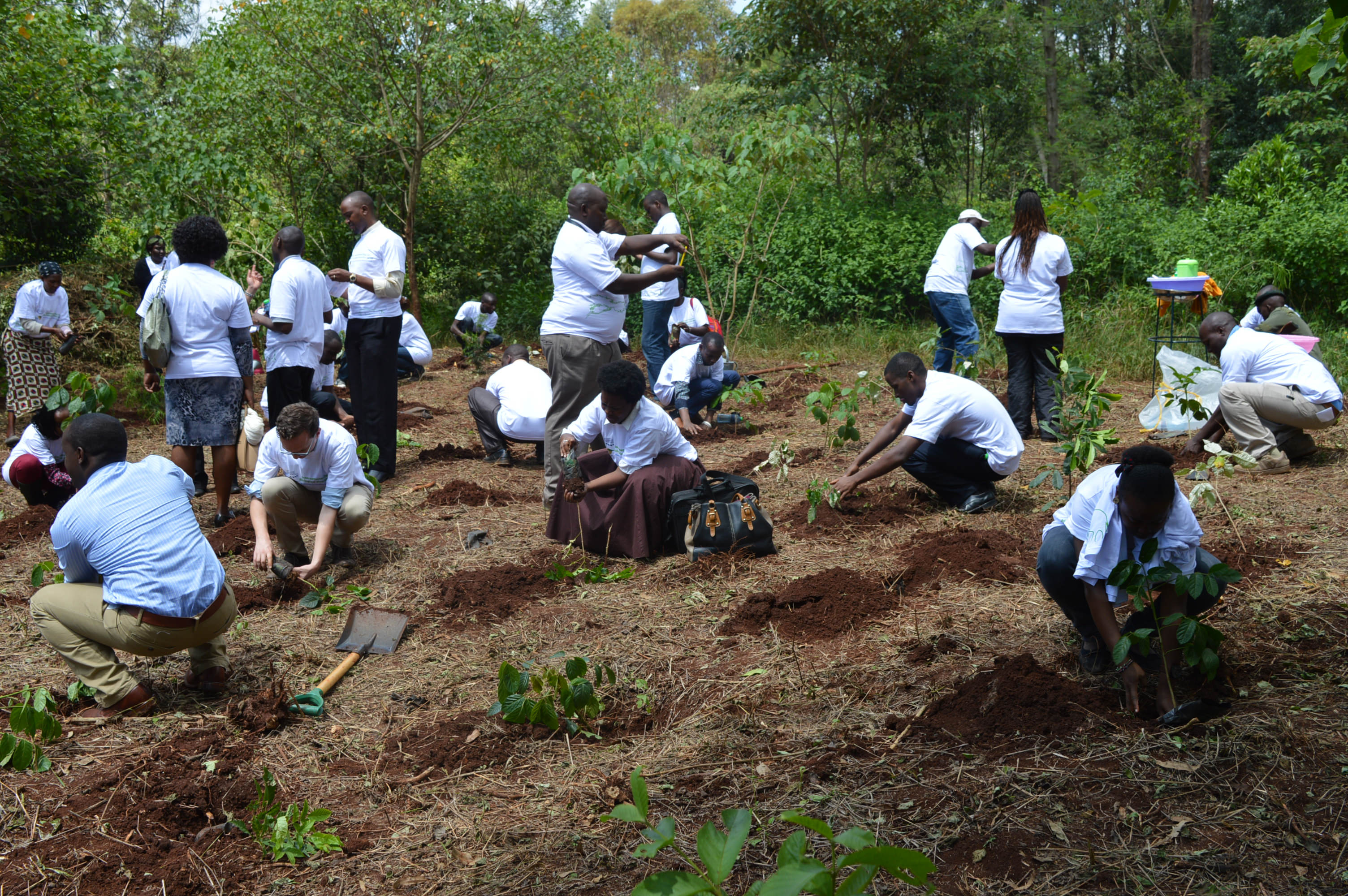 international day for biological diversity tree planting at karura